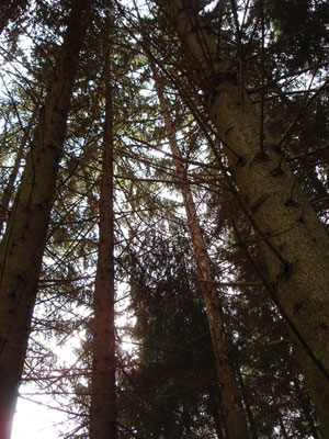 equipages-wifi-trees